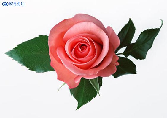 玫瑰花在化妆品中的应用有哪些?