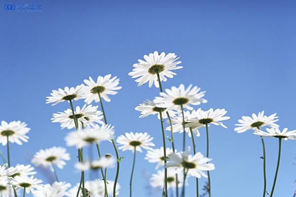 鲜花的护肤功效都有哪些-欧泉生化