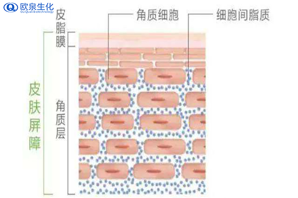 肌肤保湿可以从哪些方面入手-欧泉生化