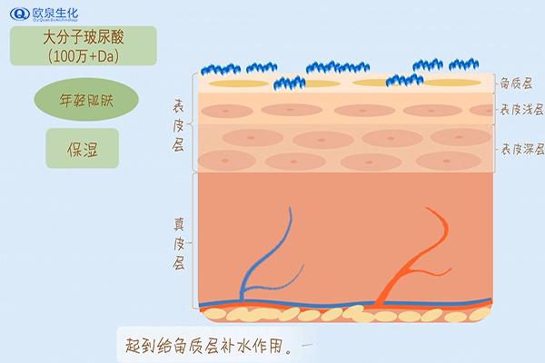 化妆品OEM中玻尿酸对收缩毛孔的影响-欧泉生化